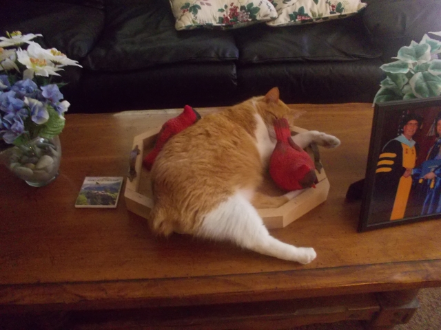 cat in tray 001